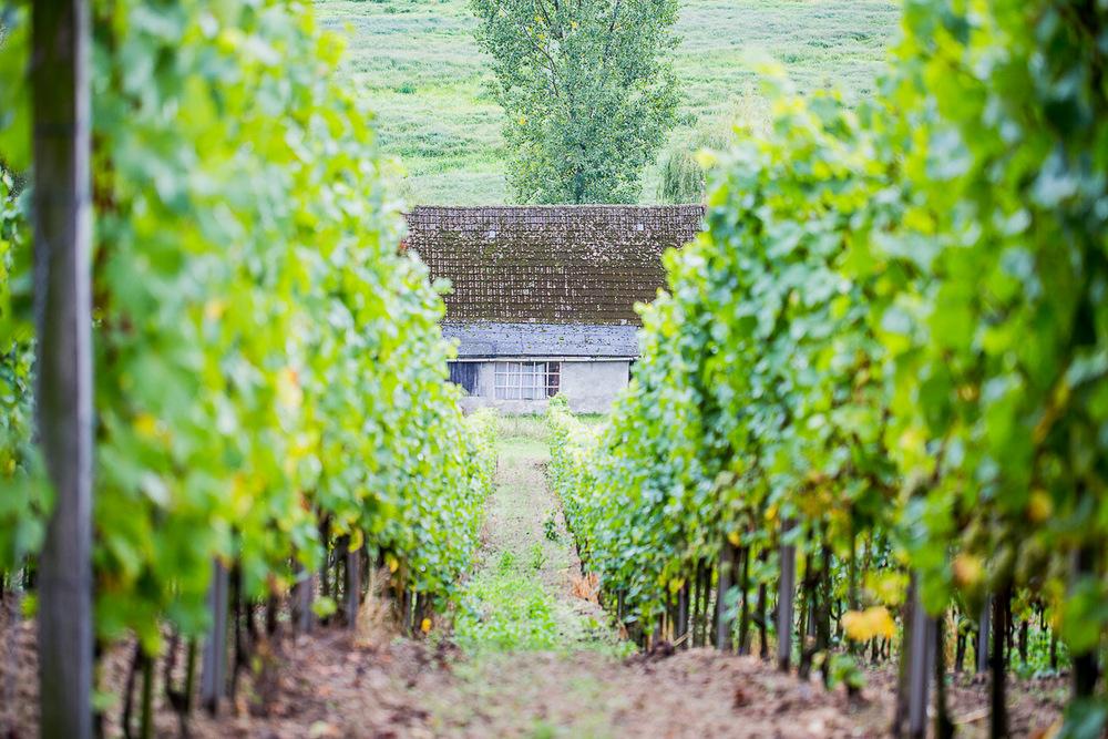 Lubuski szlak wina i miodu