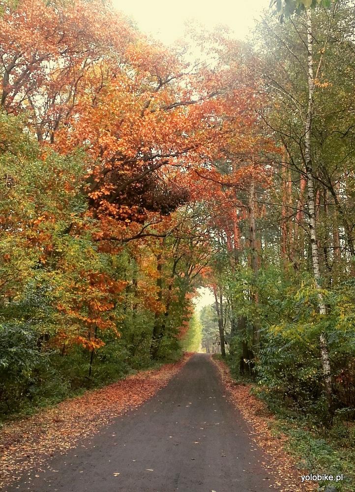 Trasy rowerowe Zielona Góra